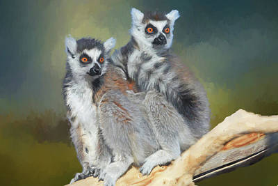 Ring Tailed Lemur Photograph - Ring-tailed Lemurs- Sedona And Verde by Donna Kennedy
