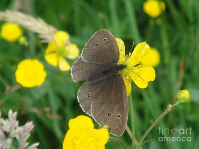 Photograph - Ringlet Butterfly by Yvonne Johnstone