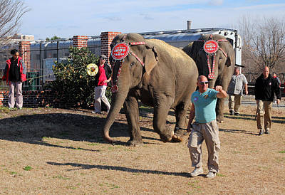 Photograph - Ringling Bros. And Barnum Bailey Elephants 10 by Joseph C Hinson Photography