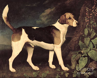 Hound Painting - Ringwood by George Stubbs
