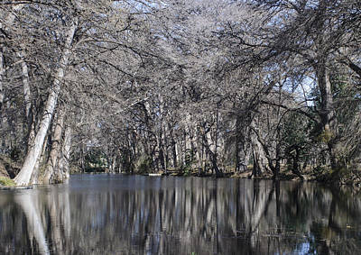 Photograph - Rio Frio In Winter by Brian Kinney