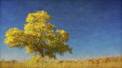 Photograph - Rio Grande Bosque Blue And Gold, New Mexico by Flying Z Photography by Zayne Diamond