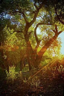 Photograph - Rio Grande Bosque Sunrise, Albuquerque, Nm by Flying Z Photography by Zayne Diamond