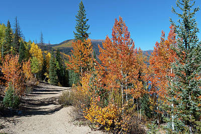 Photograph - Rio Grande National Forest Autumn Color by Cascade Colors