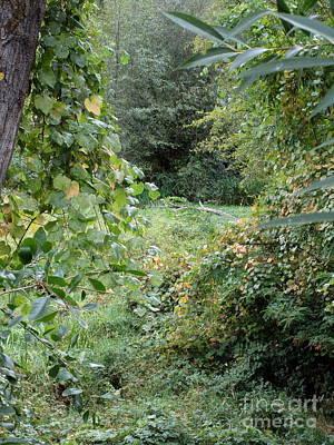 Photograph - Riparian Area Of Reinhart Volunteer Park by Marie Neder