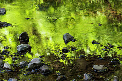 Photograph - Riparian Green Reflection by Robert Potts