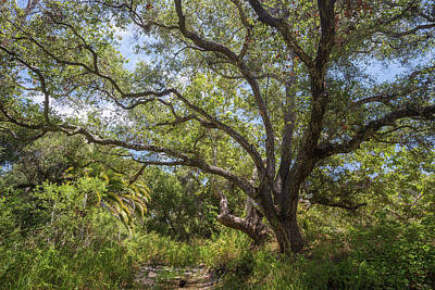 Photograph - Riparian Jungle by Alexander Kunz