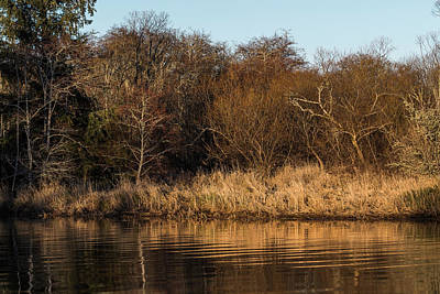 Photograph - Riparian Reflection by Robert Potts