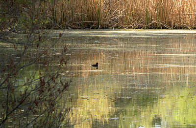 Photograph - Riparian Reflections by Laurel Powell
