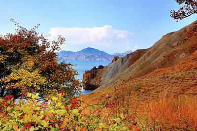Ripe Wild Rose Hips On The Hillside Of A Quiet Bay, Crimea Original