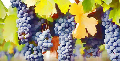 Vintner Painting - Ripe Wine Grapes Ready For Harvest by Lanjee Chee