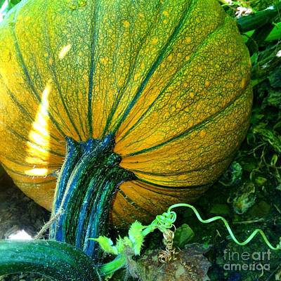 Photograph - Ripening Pumpkin by Angela Rath
