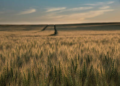 Ripening Wheat No. 1 Art Print by Al White