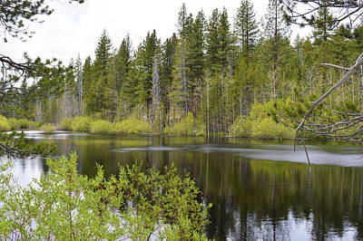 Photograph - Ripple On Forest Pond by Brent Dolliver
