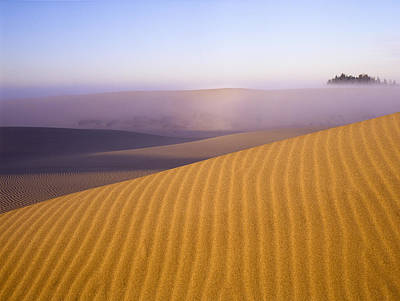 Photograph - Rippled Sand Dune by Robert Potts