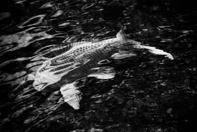 Photograph - Ripples And Koi Abstraction by Photography by Tiwago