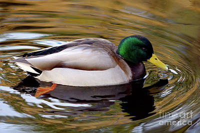 Photograph - Ripples In The Pond by Terry Elniski