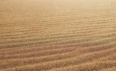Photograph - Ripples In The Sand by Kevin Schwalbe