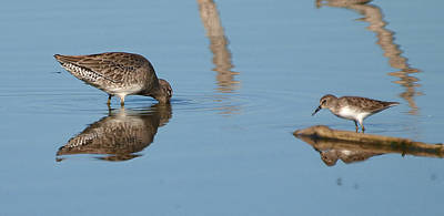 Rare Bird Sighting Photograph - Ripples by Kala King