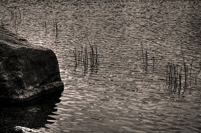 Photograph - Ripples Reeds And A Rock by Roger Passman