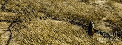 Photograph - Rippling Beach Grass by Roger Monahan