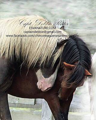Photograph - Riptide And Hoppy Stallions  by Captain Debbie Ritter