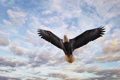 Photograph - Rise Again by Jai Johnson