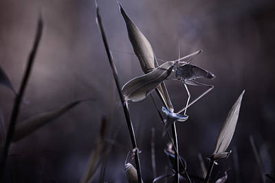 Grasshopper Photograph - Rise Of The Guardian by Fabien Bravin