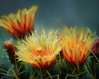 Photograph - Rising Above - Barrel Cactus Flowers by Nikolyn McDonald