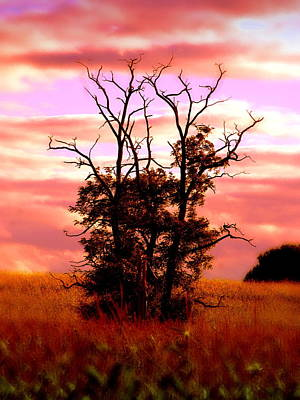 Tree Photograph - Rising From The Corn by Emily Stauring