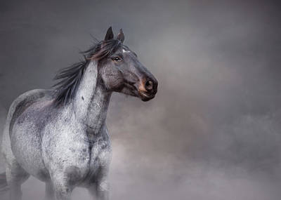 Photograph - Rising From The Mist by Debby Herold