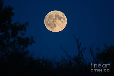 Photograph - Rising Full Moon by Cheryl Baxter