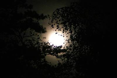 Photograph - Rising Moon In The Pines by Kathryn Meyer