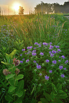 Photograph - Rising Sun Bathes Lost Valley Wildflowers In Glacial Park by Ray Mathis