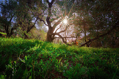 Photograph - Rising Sun by Giovanni Allievi