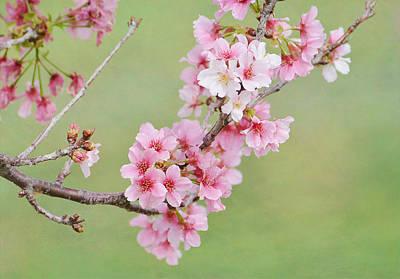 Photograph - Rites Of Spring  by Fraida Gutovich
