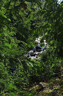Photograph - River And Leaves In Lousa Mountains. Portugal by Angelo DeVal