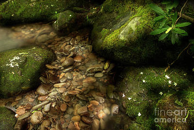 Photograph - River Bank by Mike Eingle