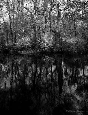 Art Print featuring the photograph River Bank Palmetto by Marvin Spates