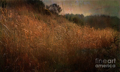 Digital Art - River Bank Reeds by Liz Alderdice