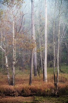 Photograph - River Bank Trees by David Morel