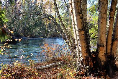 Photograph - River Birch by Kathy Bassett