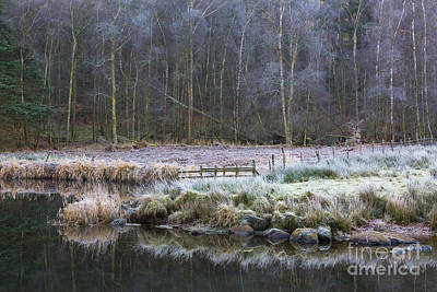 River Brathay Reflections And Silver Birch Art Print