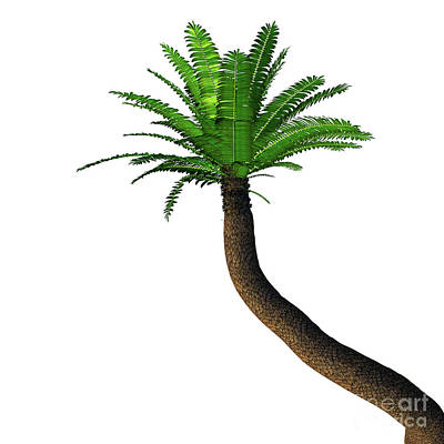 Digital Art - River Cycad Encephalartos Altensteinii Tree by Corey Ford
