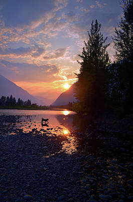 Photograph - River Dog 2 by Tara Turner