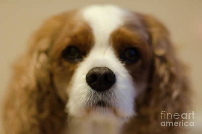 Photograph - River Dog Closeup by Dale Powell