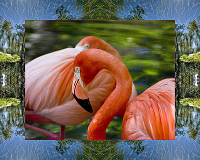 Photograph - River Flamingos by Bell And Todd