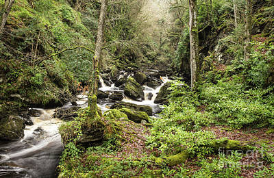 Photograph - River Flowing Though Beautiful Forest  by Ciaran Craig