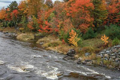 Photograph - River Foliage by Jane Luxton