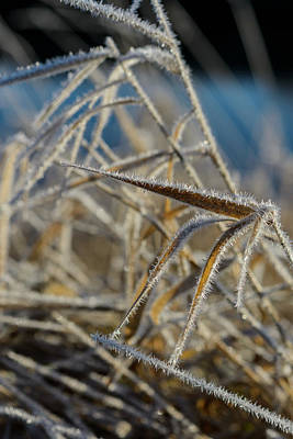 Photograph - River Grass And Frost by Robert Potts